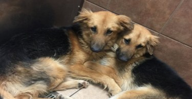 2 Inseparable Dog Friends Dropped At Shelter, Can`t Stop Hugging Each Other!