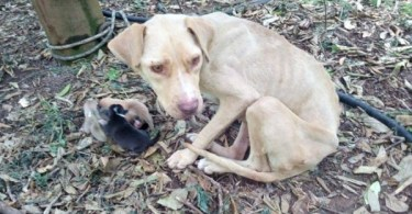 Rescued Chained Dog Gave Birth In The Middle Of Nowhere