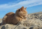 They Adopted 20-Year-Old Abandoned Cat And Made His Last Months Happiest!