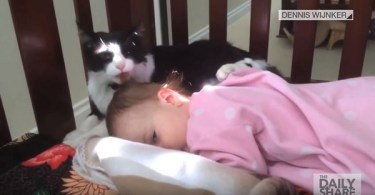 Adorable Kitty Gives Bath To Her Human Baby Sister