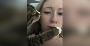 Cat Cuddled Next To Her Human And Kisses Her 2