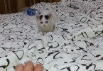 Cute Rescue Kitten Playing And Jumping On The Bed