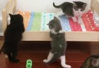 Cute Tiny Kittens Simply Love Their New Special Bed