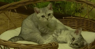 Kitten Gives The Cutest Massage To His Sister