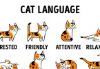 Learn How To Understand The Cat Language Better