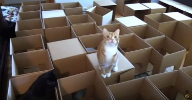 Man Creates 50 Box Cat Maze For His 2 Cats To Celebrate International Cat Day