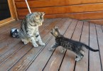 Cat Mom Cleans Her Cute Kitten By Force