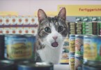 This Is The Funniest And Very Crazy Cat Commercial!