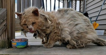 Stray Poor Kitty Living In The Street In Terrible Condition Gets A New Chance In Life