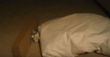 The Cutest Kitten Trapped By Falling Pillow