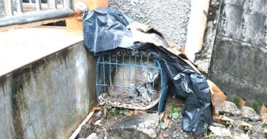 Mom Cat And Her Kittens Dumped In Cage Are Finally Rescued