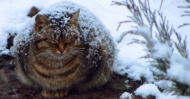 Pregnant Stray Cat Freezing Outside In The Snow, But Then This Man Saw Her And Everything Changed