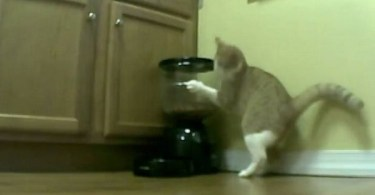 Smart Cat Found Out How to Get Extra Food From The Automatic Feeder