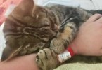 Woman Found Abandoned Poor Kitten At The Gas Station Lying In Chemicals, And Turns Out To Be a Miracle!