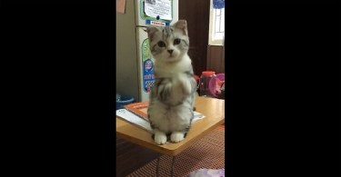 Funny Kitty Has Hilarious Way Of Telling Her Daddy She Wants To Take A Nap