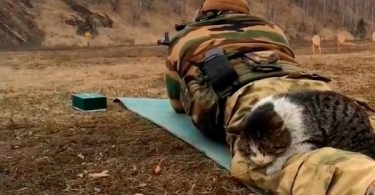 Stray Cat Noticed This Soldier And Fell Asleep On Him