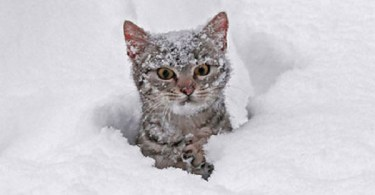 What Will Happen If You Let Your Cats To Discover The Snow For The First Time