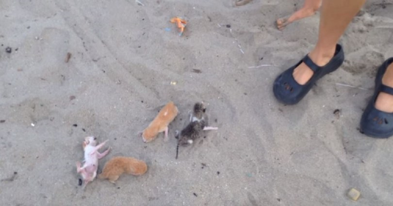 Woman Found Abandoned Newborn Kittens Crying For Help On The Beach