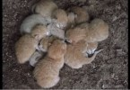 Woman Found These Hungry 3-Day-Old Kittens Huddled Together For Warmth