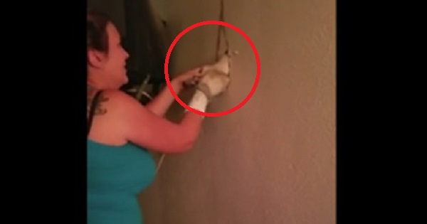 Woman Heard Mysterious Noises From The Inside Of The Wall, And Then She Broke The Wall And Was Shocked From What She Saw Inside