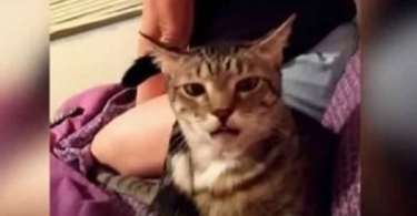 Cat Farts And Leaves Her Best Friend Speechless
