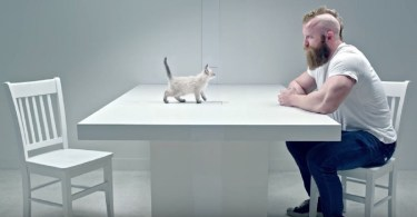Kittens VS Thugs Staring Contest. Who Will Win