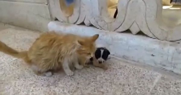 Mom Cat Heard This Orphaned Puppy Crying For Some Help And She Took Care Of Him