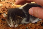 Man Feeding Stray Cats Gets The Cutest Surprise Ever!