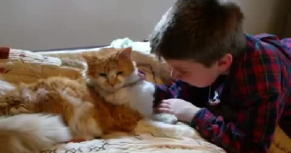 Touching Moment When Boy Is Finally Gets With His Missing 11-Year-Old Kitty