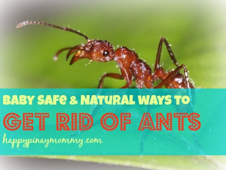 Natural and Baby Safe Ways to kill Ants.