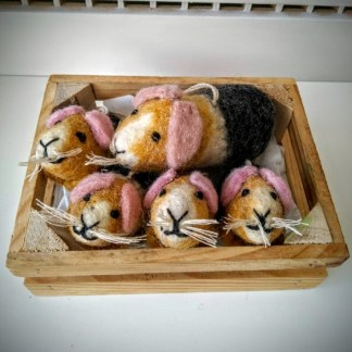 guinea pigs group