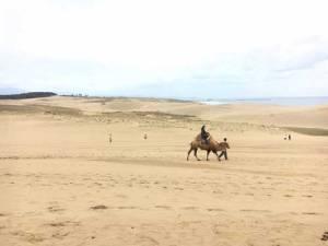 鳥取砂丘でラクダに乗ってゆるりと1周