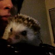 Gatsby during cuddle time just wanting to explore.