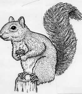 ANL1108 Squirrel