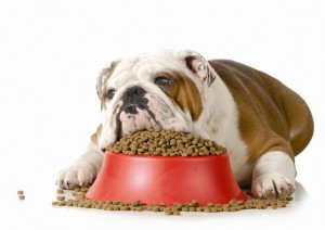 Pet Obesity: Killing With Kindness