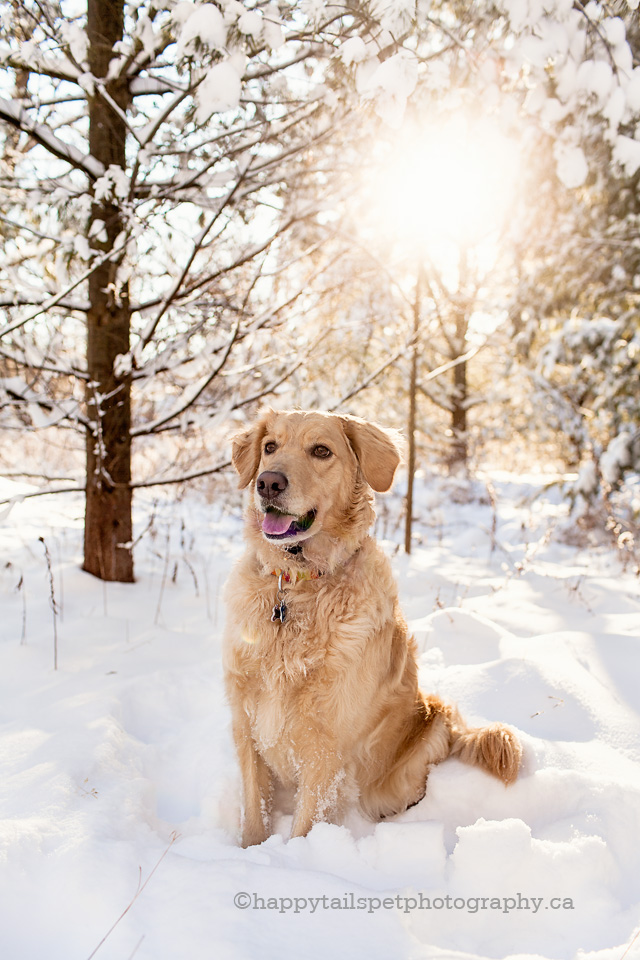 Cute Dog Doodle Wallpaper Ontario Winter Dog Photography Lowville Park