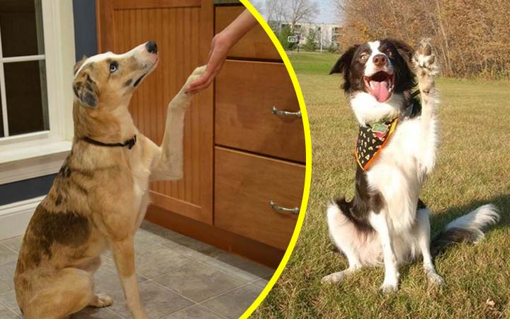 10 Fun and Impressive Tricks You Need To Teach Your Dog by Mark Reed