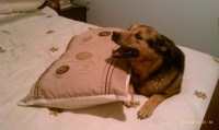 Pillow Humping | Happy Tails To You