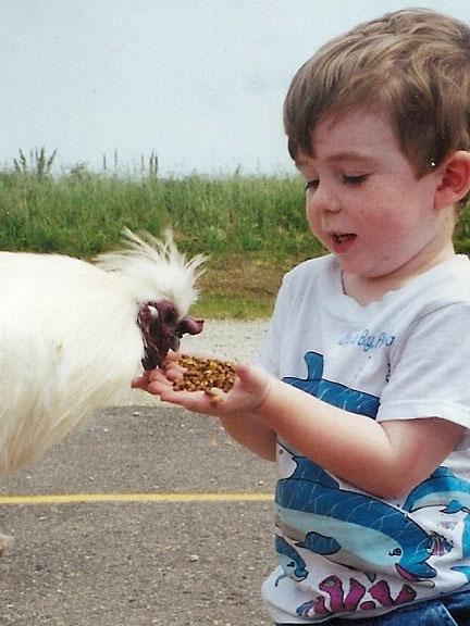 feedingchicken