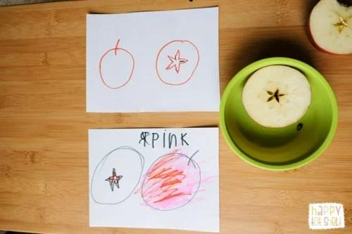 apple anatomy activity for kids