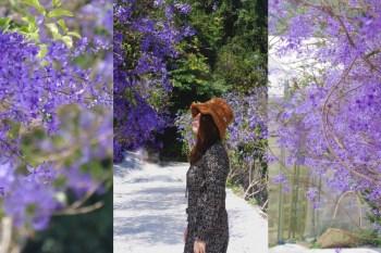 南投新景點。紫色秘境│IG打卡拍照勝地,埔里新景點,夢幻錫葉藤小道