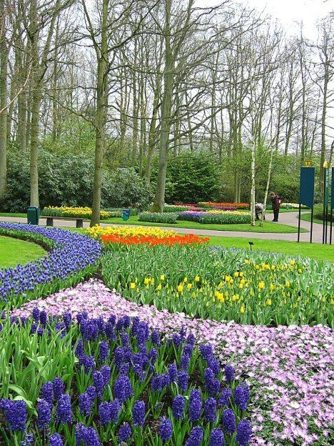 54 parterres de fleurs