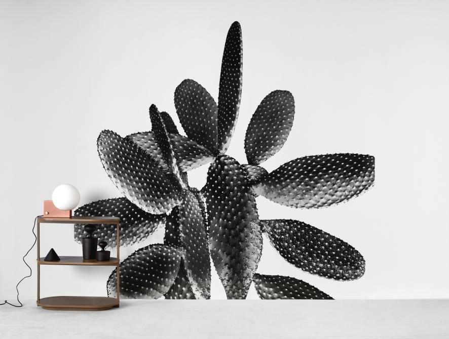 black white cactus 1