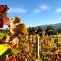 162_Douro_Valley_Weinreben