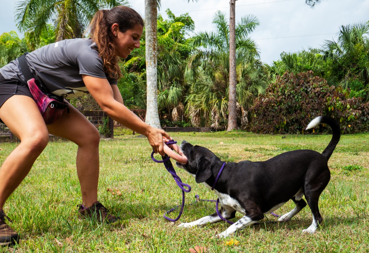 Link to free puppy class