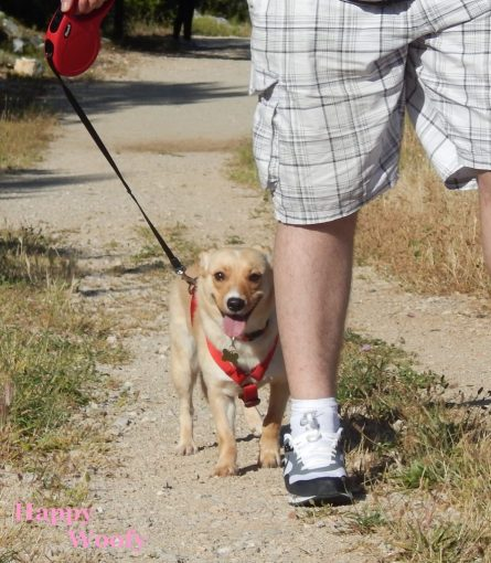 promenade pieds 893x1024 - Happy sort des sentiers battus (conseils promenade)