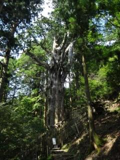 玉置神社4