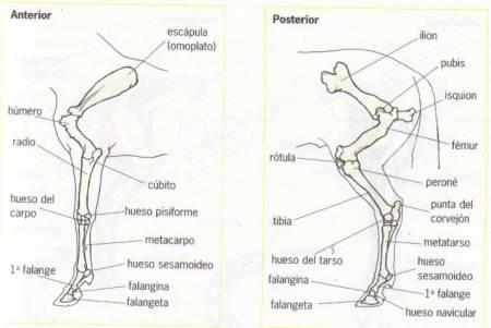 Gimli (SPC) desarrollando su musculatura (2/5)