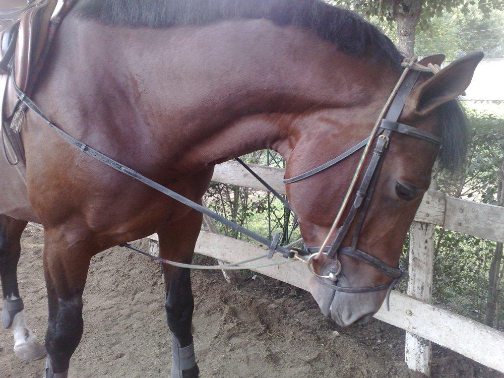 Ayudas para entrenar al caballo. El chambon (3/5)