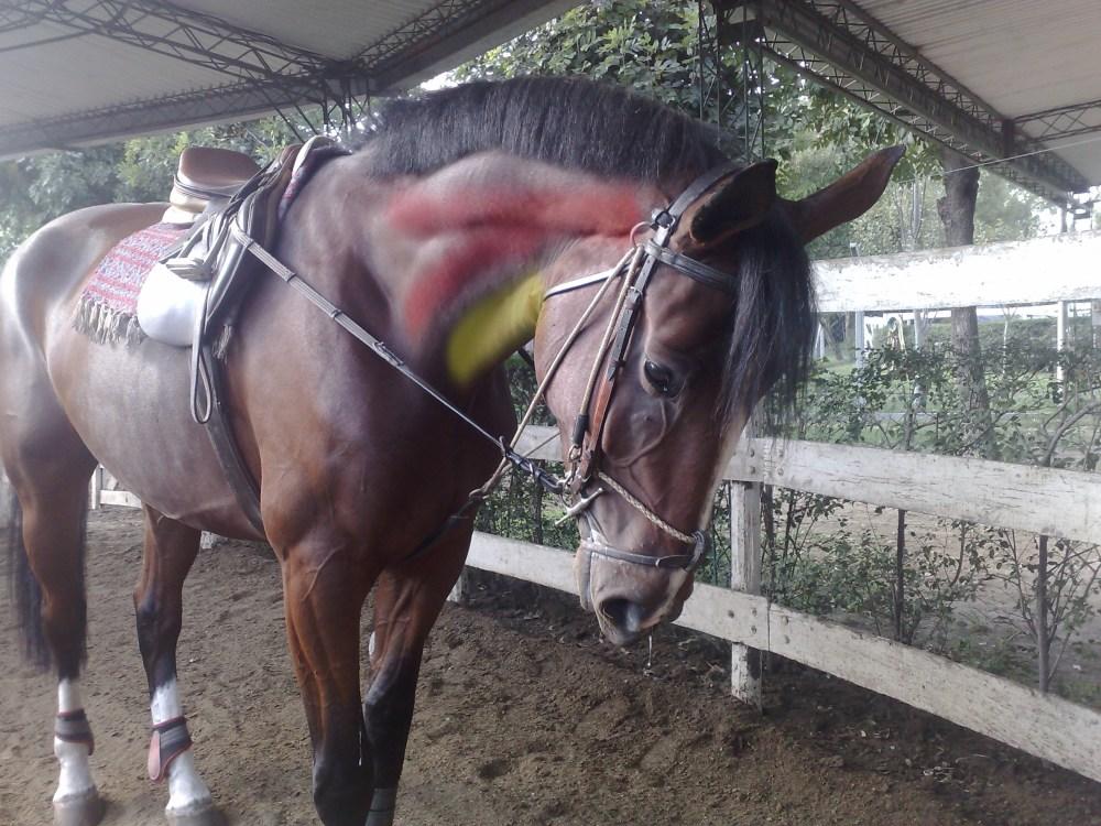 Ayudas para entrenar al caballo. El chambon (2/5)